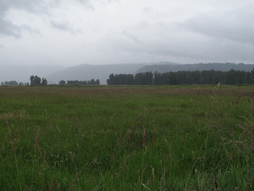 A view from the short hike at Steigerwald Lake Wildlife refiuge