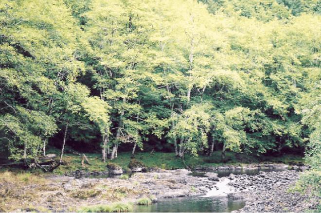 coast-range-hike-salmonberry-river