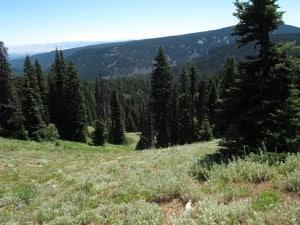 lookout-mountain-hike-mount-hood-flowers