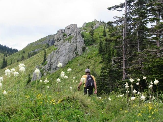 Silver Star Mountain and other Portland hikes are starting to bloom.