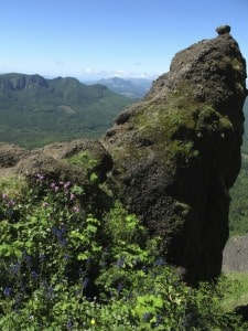 Saddle Mountain is one of the best hikes near Portland, especially in July, when the summer wildflowers are blooming.
