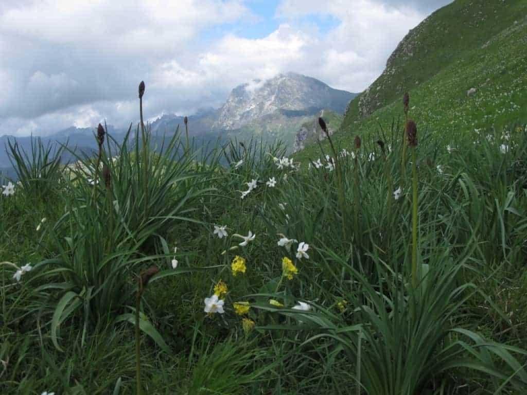 Alpine splendor.