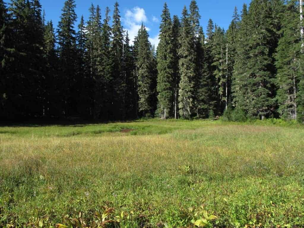 portland-hikes-roaring-river-cache-meadow