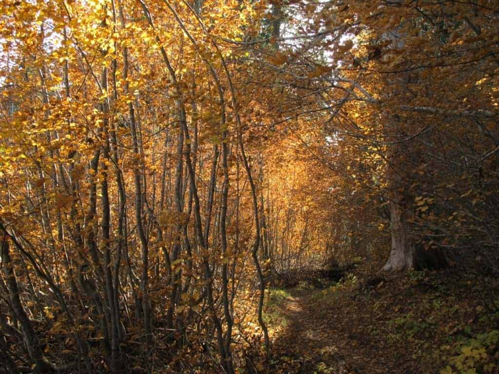 Best Fall colors hikes near Portland