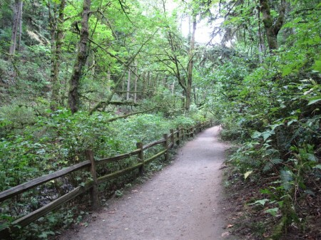 Macleay Park in Northwest Portland is a good winter hiking destination.
