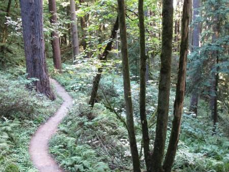 Upper Macleay Trail