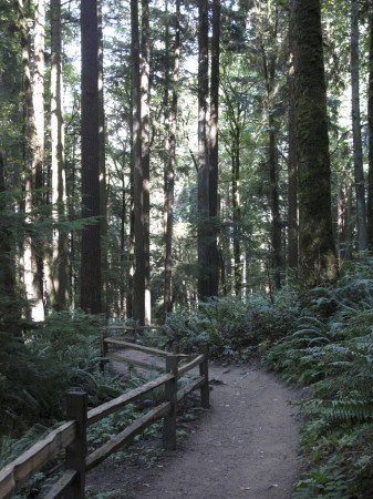 portland-hikes-winter-macleay-park-upper2