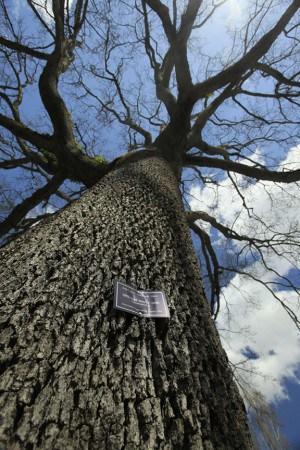 Portland Heritage Trees