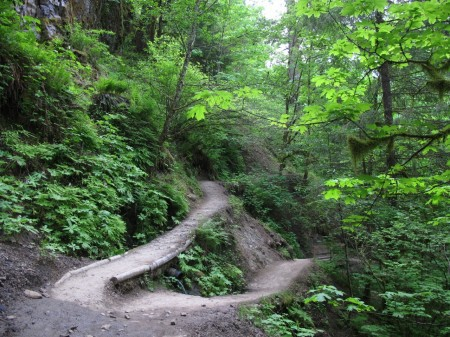 Wachlella Falls in the Columbia River Gorge is a great hike for kids and families