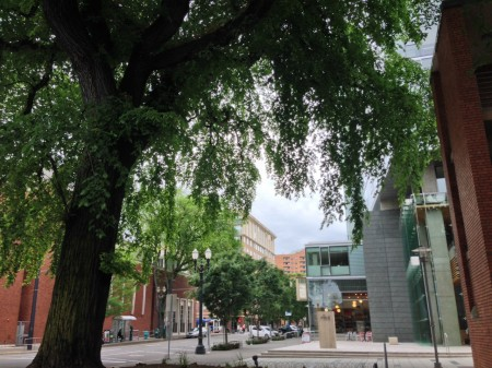 Portland Heritage Tree #1 is an American Elm Downtown