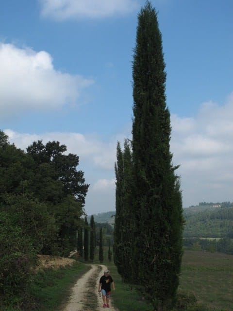 Walking along a cypress-lined country road in Chianti.
