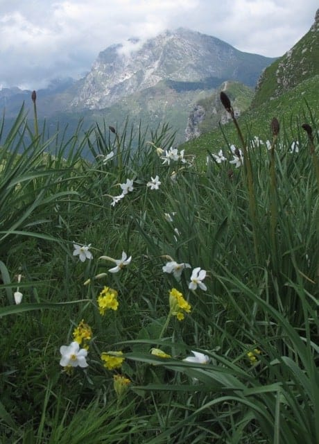 Wildflowers and the Apuane Alps, north of Lucca in Tuscany.