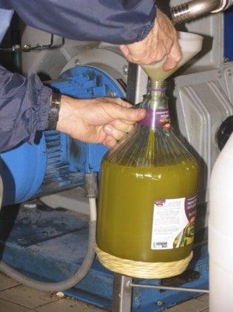 Olive oil, pre-filtering, in Tuscany.