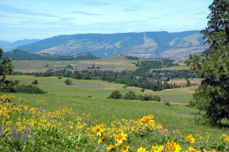 Tom McCall Preserve, east of Hood River (from alltrails.com)