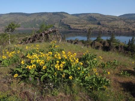 memaloose hills state park columbia river gorge