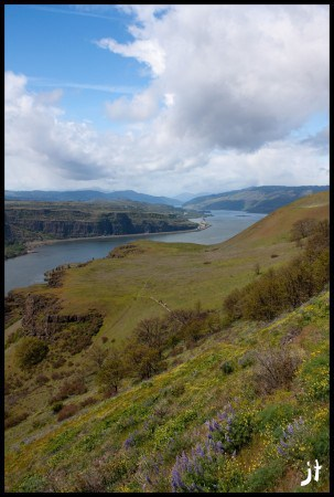 Wildflower Hikes Columbia River Gorge