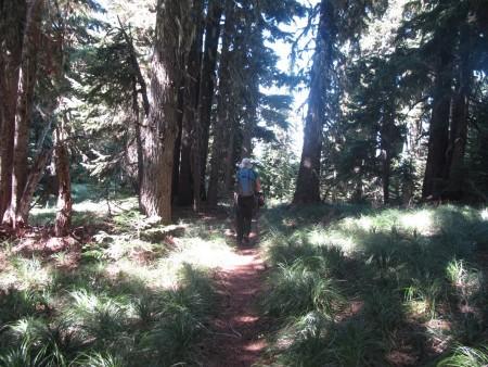 Big trees and beargrass up on Yocum Ridge.
