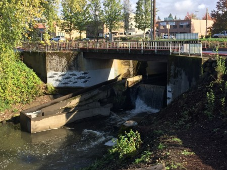 Dam and fish ladder on Kellogg Creek. Johnson Creek also flows into the Willamette at this park.