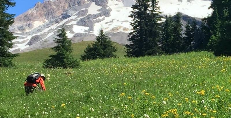 best-mount-hood-hikes-paradise-park-timberline-lodge-featured