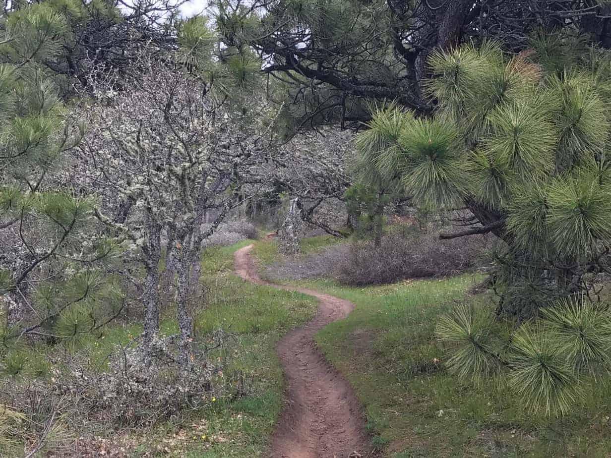Columbia Gorge Wildflower Hike: Coyote Wall Loop, 4-19 ...