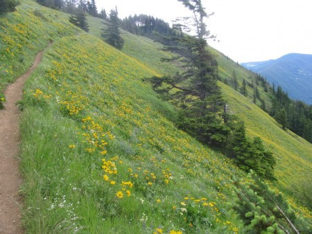 The rest of the Dog Mountain meadows (!!) on the Augsperger Trail.