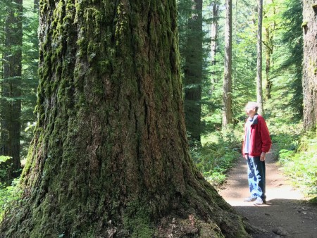Giant Douglas Fir along the Rim Trail