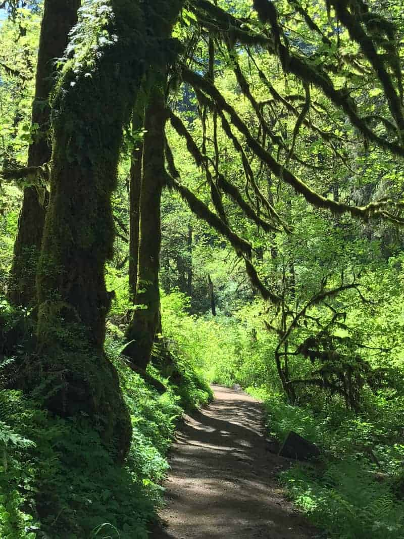 Great Oregon Hikes: Silver Falls State Park   Author Paul ...
