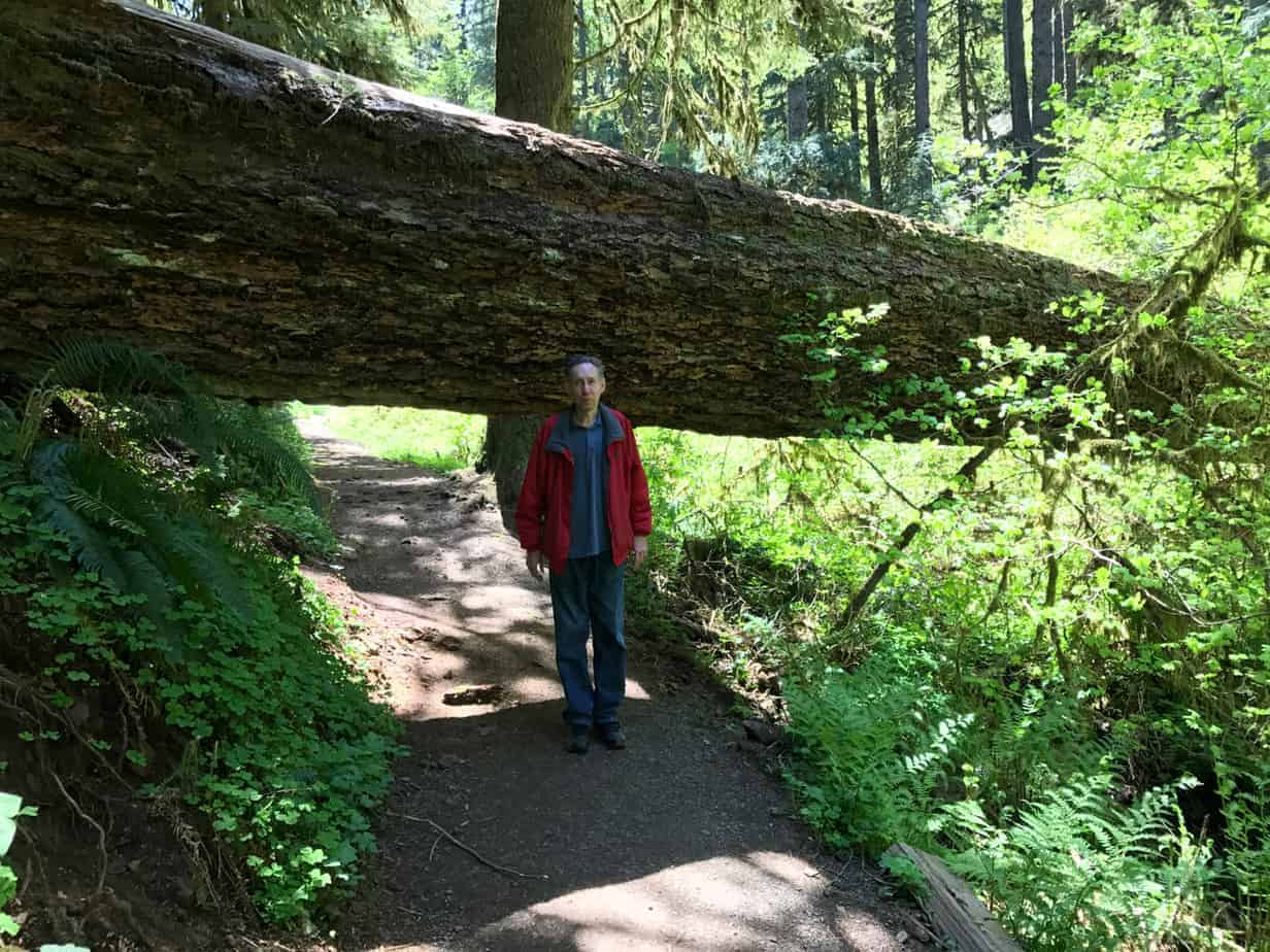 Great Oregon Hikes Silver Falls State Park on Latest Write Up Form 2