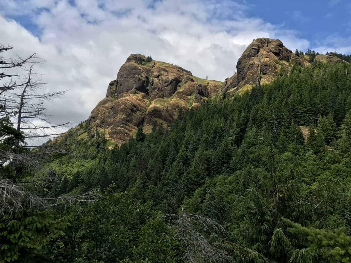 Saddle Mountain Hike is a Flower and Forest Show in the ...