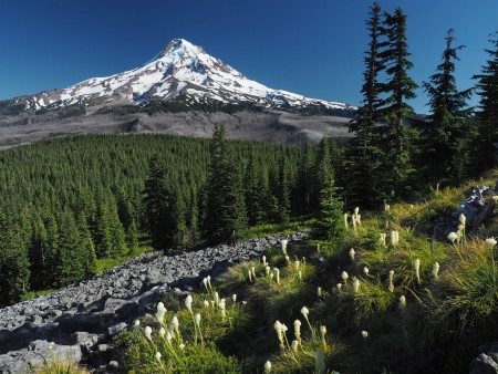 Mt. Hood form Owl Point,
