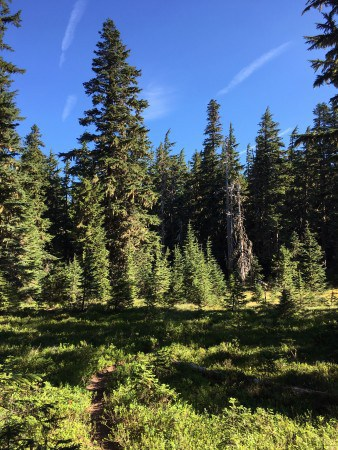 The Old Vista Ridge Trail winds through Blind Luck Meadow on the way to Owl Point (photo by Tom Kloster of Wy'East Blog.)