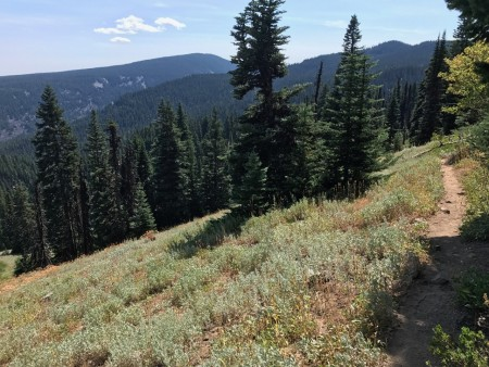 Along the Divide Trail