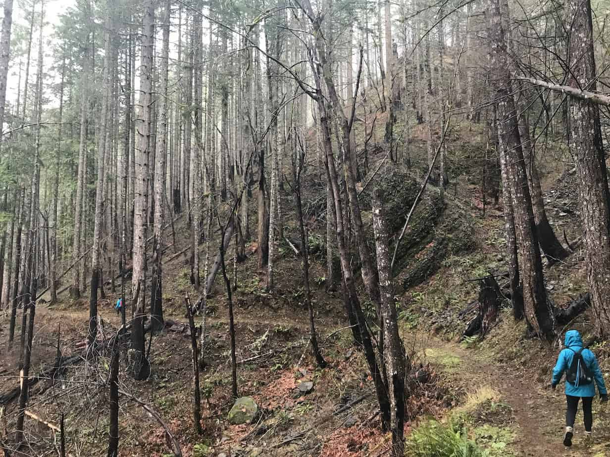 eagle creek trail columbia river gorge oregon fire