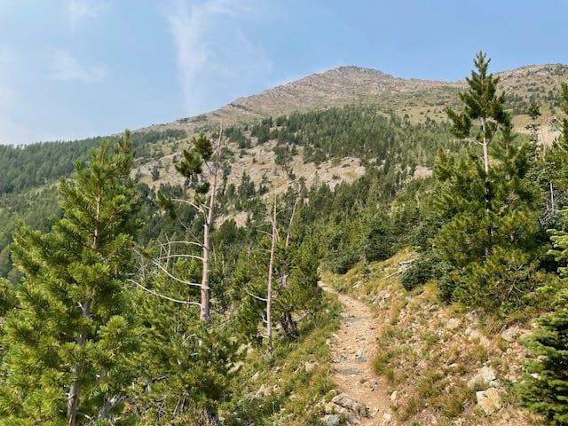 A hiking trail leads through trees toward a far-off mountain